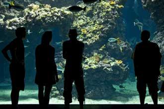 Musée-Oceano-Fotolia_435786