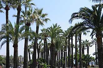 Cannes-palmeraie-de-Bijou-P