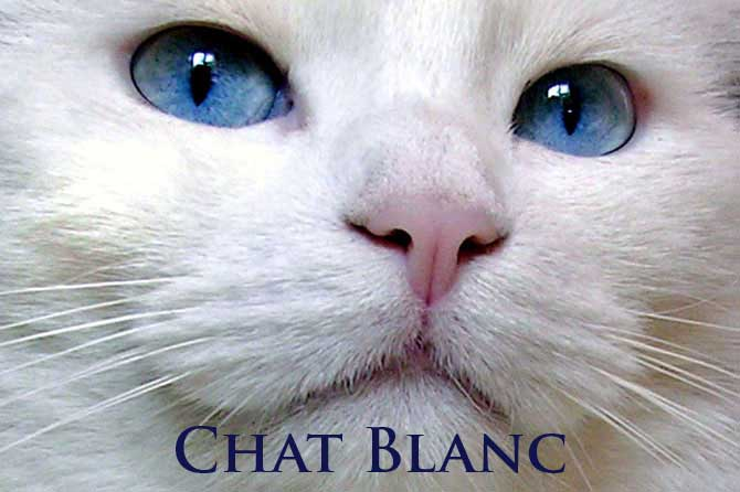 blanch chatrooms Join us now and find hot live mistress cams, free bdsm chat rooms, free domme cams, webcam goddesses, fetish cams, bdsm cams, live xxx cam sex and more.