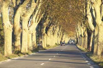 St-Remy-de-Provence.-Route.