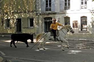 St-Remy-de-Provence.-Taurea