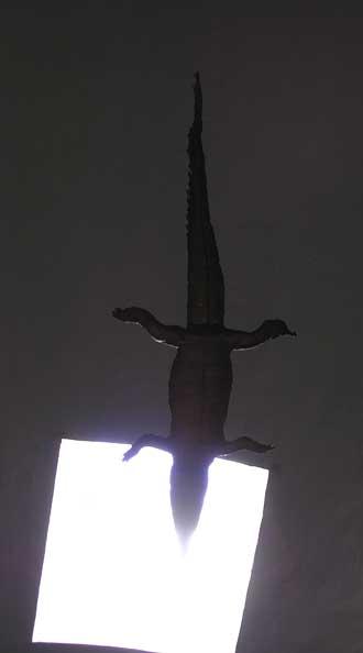 Pignans.-Crocodile-2.-P.-Ve