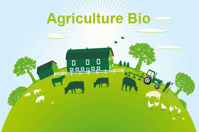 Agriculture organique
