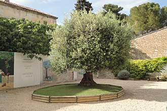 gareoult-olivier-pv
