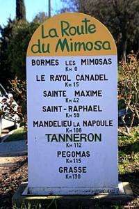 Route-Mimosa-Fotolia_301329