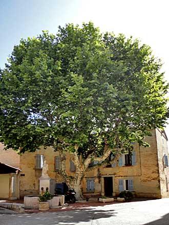 vins-sur-caramy-village-1