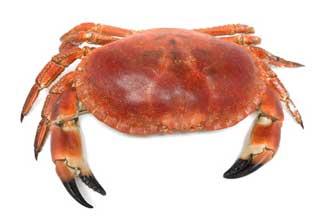 Crabe-Fotolia_98259071