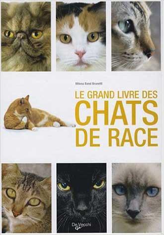 chats-de-race